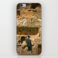 Bird on a wall iPhone & iPod Skin