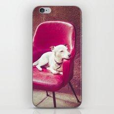 Relaxing Dog iPhone & iPod Skin