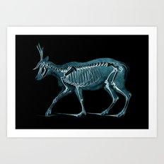 X-ray Deer - Stag Illust… Art Print