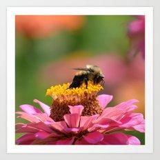 Bee on a Zinnia Art Print