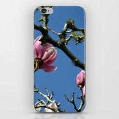 Saucer Magnolias II iPhone & iPod Skin
