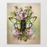 Cicada [The last summer chant]] Canvas Print