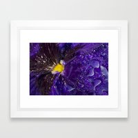 Dressed in gold and dew Framed Art Print