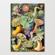 Ocean Life Too Canvas Print