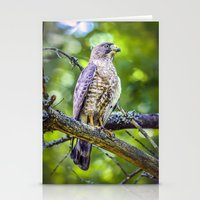 Broad wing Hawk Stationery Cards