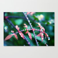 Tears And Rain Canvas Print