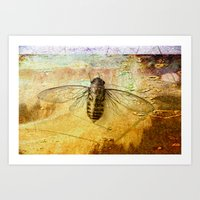 Life Cycle of a Cicada Art Print