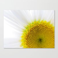You Brighten My Day Canvas Print