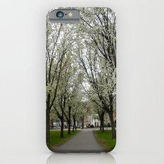 Boston Trees iPhone 6 Slim Case