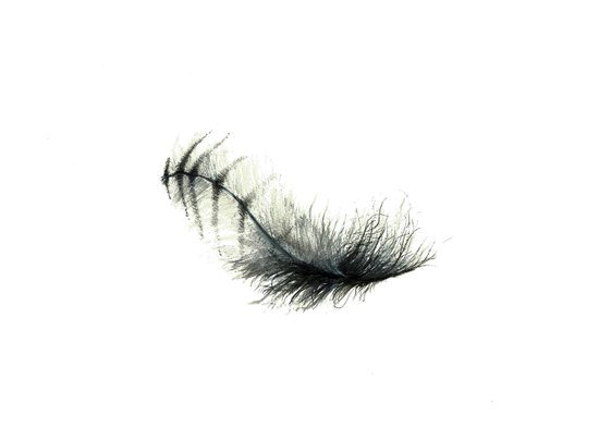 Baby Owl's Nape Feather, Unadorned Art Print