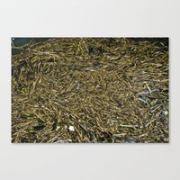 Floating Wood Texture Canvas Print