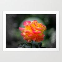 Rose 2138 Art Print