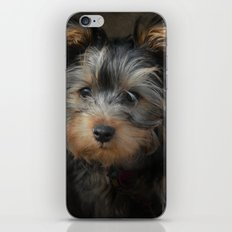 Yorkshire Terrier Puppy Portrait iPhone & iPod Skin