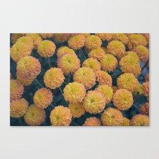 Autumn All Over Sunshine Chrysanthemums -- Fall Botanical Canvas Print
