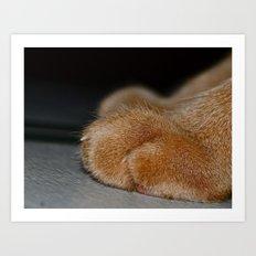 Take a Paws Art Print