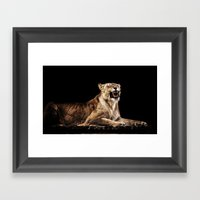 Roaring Lion Framed Art Print