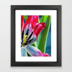 Pink and White Tulip Framed Art Print