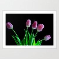 Blushing Tulips Art Print
