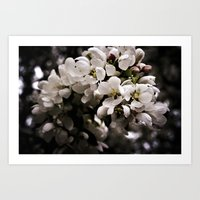Apple Blossoms 3 Art Print