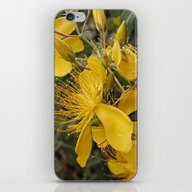 iPhone & iPod Skin featuring Beautiful St Johns Wort by Wendy Townrow