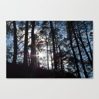 Sunlight In The Dark For… Canvas Print