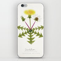 Dandelion Modern Botanic… iPhone & iPod Skin