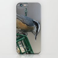 Red-breasted Nuthatch iPhone 6 Slim Case
