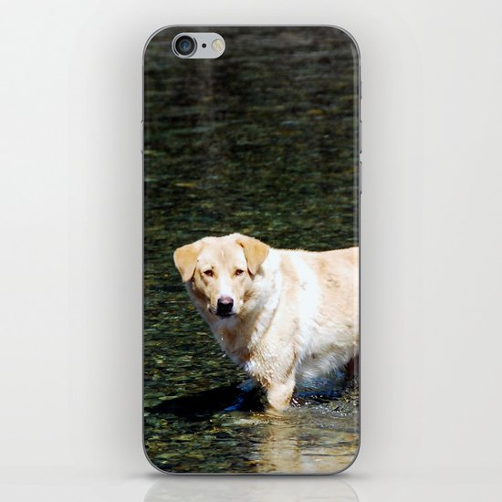 Mongolian Dog iPhone & iPod Skin