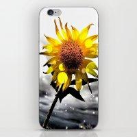 Solar Flower iPhone & iPod Skin