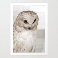Snowy Owl | Fig. 01 Art Print