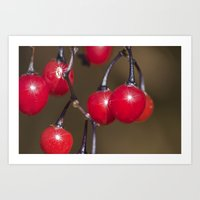 Red Berry Sparkle Art Print