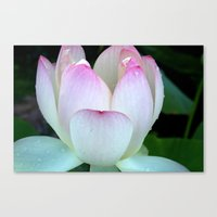 Pink Lotus Rain Drops Canvas Print