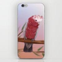 Galah iPhone & iPod Skin