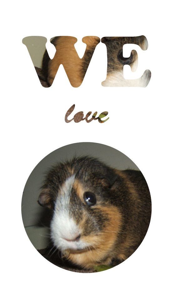 We Love Guinea Pigs Art Print