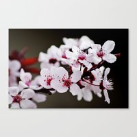 Signs of Spring 2 Canvas Print