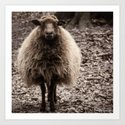 Sheep Stare Art Print