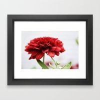 Chrysanthemum II Framed Art Print