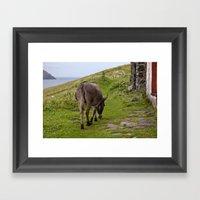 Wild Burro Framed Art Print