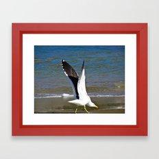 Jeffy Seagull Framed Art Print