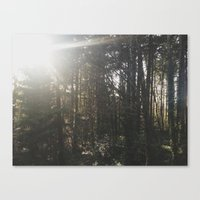 Of light & trees Canvas Print
