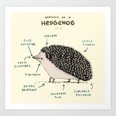 Anatomy of a Hedgehog Art Print