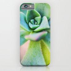 Echeveria iPhone 6 Slim Case