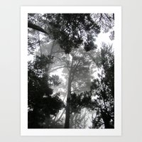 Ghosts in the Trees Art Print