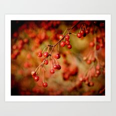 Cranberries Art Print
