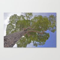 Under The Giving Tree Canvas Print