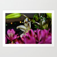 The White Lilac Art Print