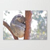 Sleeping in the Trees - Koala Bear Canvas Print