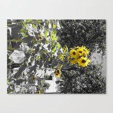 Sunflower 1 Canvas Print