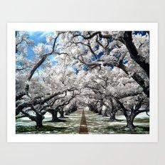 Oak Alley Art Print