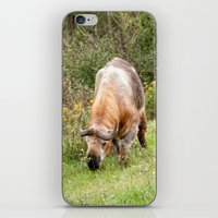 The Endangered Takin iPhone & iPod Skin